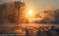 Лебединый заказник (Советский район)