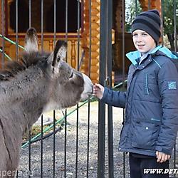Страусиное ранчо в Барнауле
